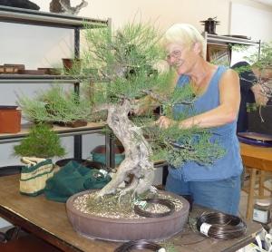 Martha and her Australian pine