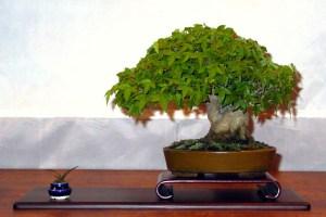 trident-dai-ichii-09