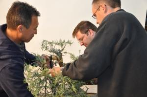 bonsai 5,6-09 023