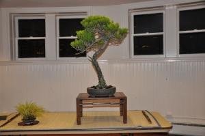 bonsai 5,6-09 075