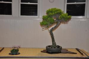 bonsai 5,6-09 079