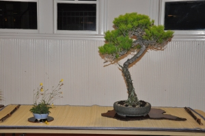 bonsai display 5,6-09 083