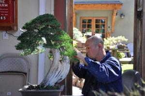Shimpaku on California Juniper