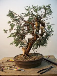 Jonh  bent juniper