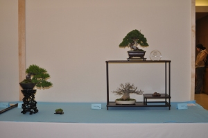 Members Choice Award Shohin Conifer