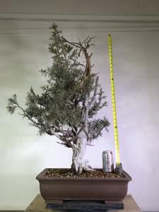 tree 1-2