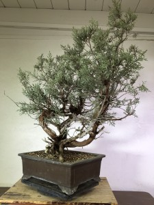 tree 5-2