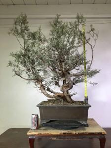 tree 5-4