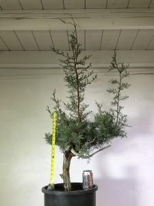 tree 7 (2)